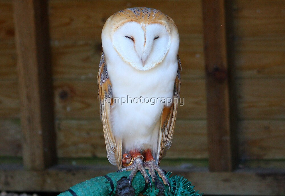 Barn Owl........ by jdmphotography