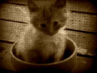 In the Flowerpot by solitaire