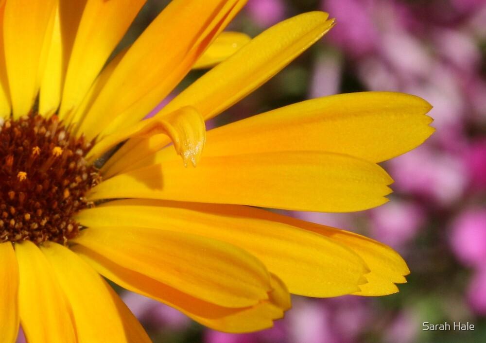 Yellow by Sarah Hale