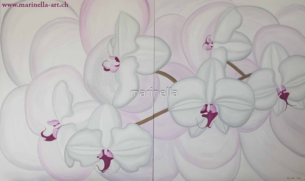 White-Pink Orchide by Marinella  Owens