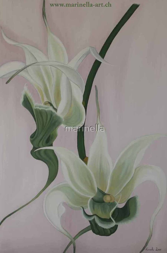 Aeranthes-Peyrot-Orchide by Marinella  Owens