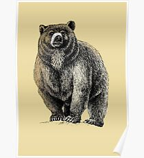 The Great Bear - A fierce protector Poster
