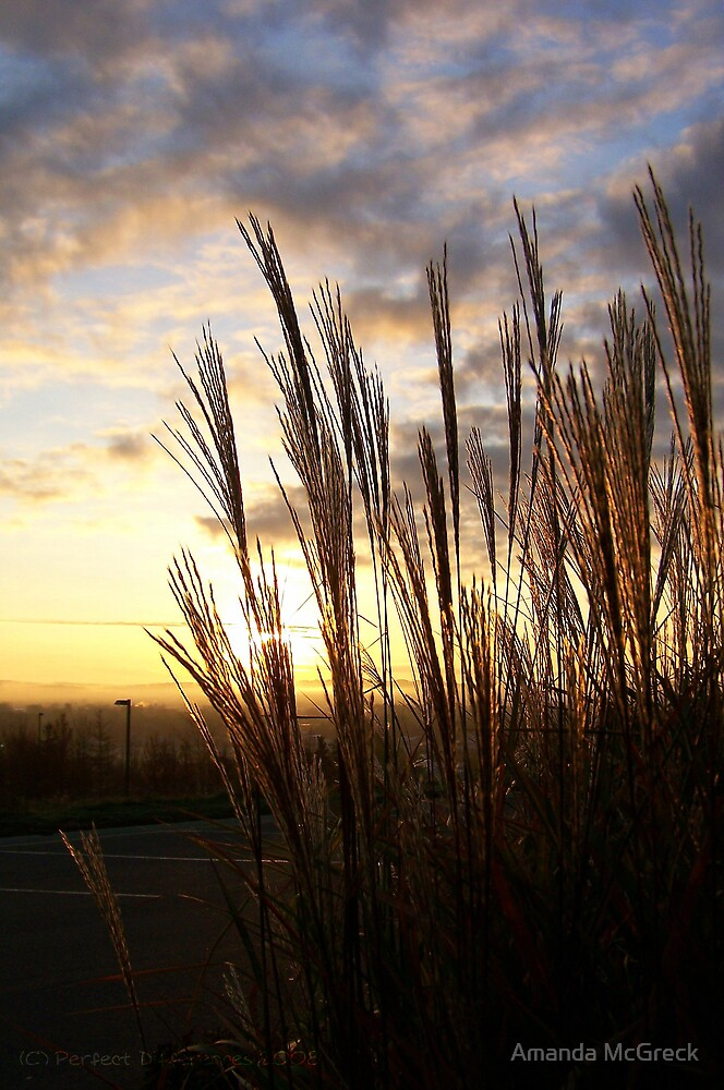 Sunlit Grasses by Amanda McGreck