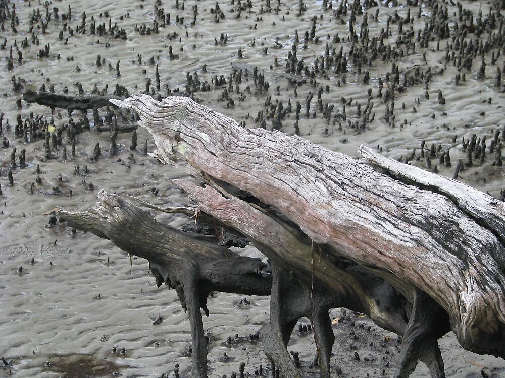 The Mangroves by Robert Jenner
