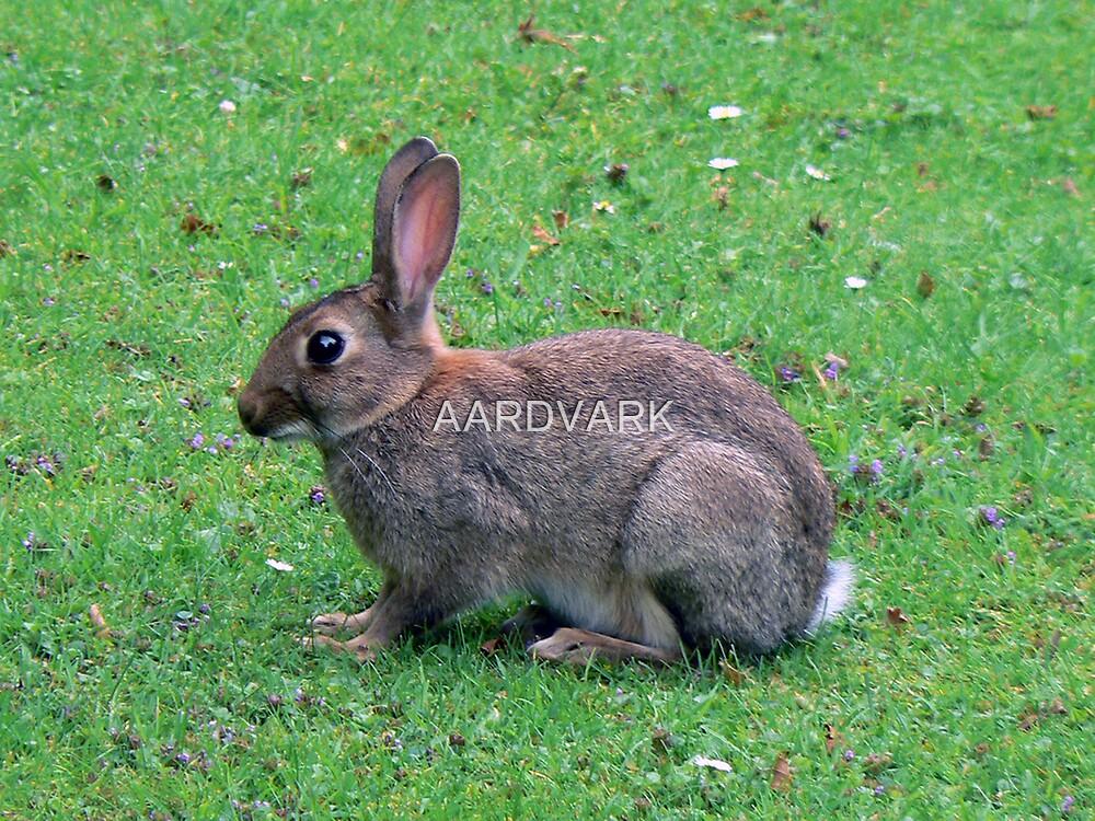 A Wild Rabbit by AARDVARK