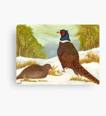 Brace of Pheasants Canvas Print
