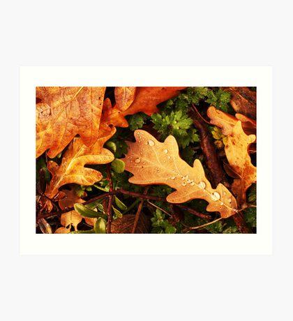 Oak Leaves. Art Print