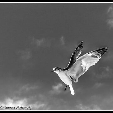 Flying by michaelwsf