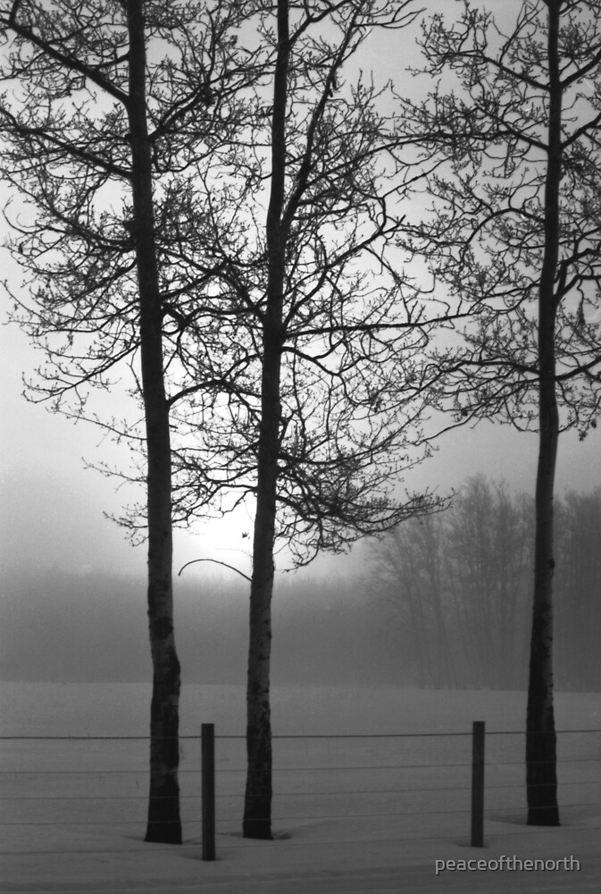 The Three Trees by peaceofthenorth