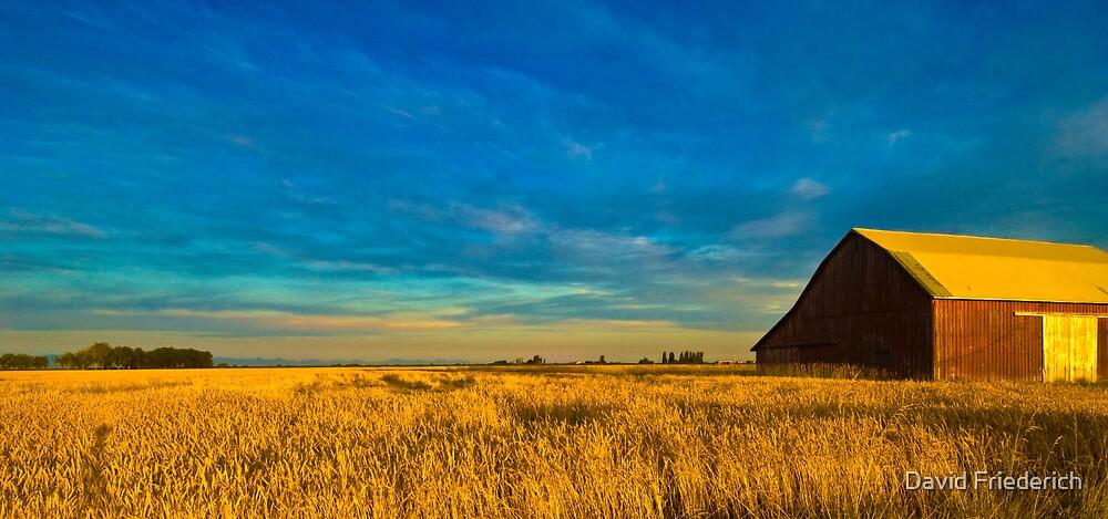 Summer Gold by David Friederich