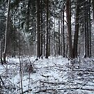 First snow in forest by mrivserg
