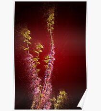 Digitally enhanced image of a Judas Tree (Cercis siliquastrum). Photographed in the Upper Galilee Israel Poster