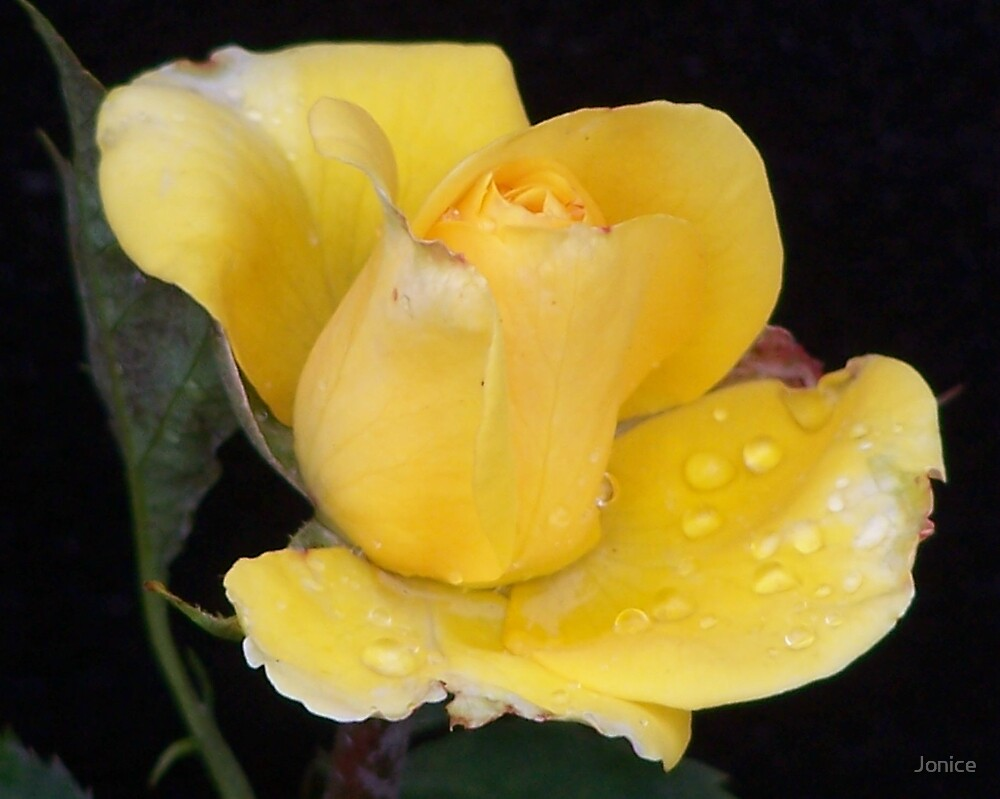 Yellow Rose Bud by Jonice