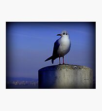 Meditating Seagull Photographic Print