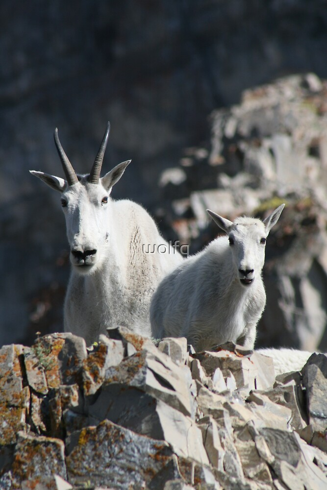 Mountain Goat Duo by wolfq