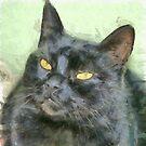 Black Cat by taiche