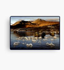 Frosted reeds - Lochan na h-Achlaise * Canvas Print