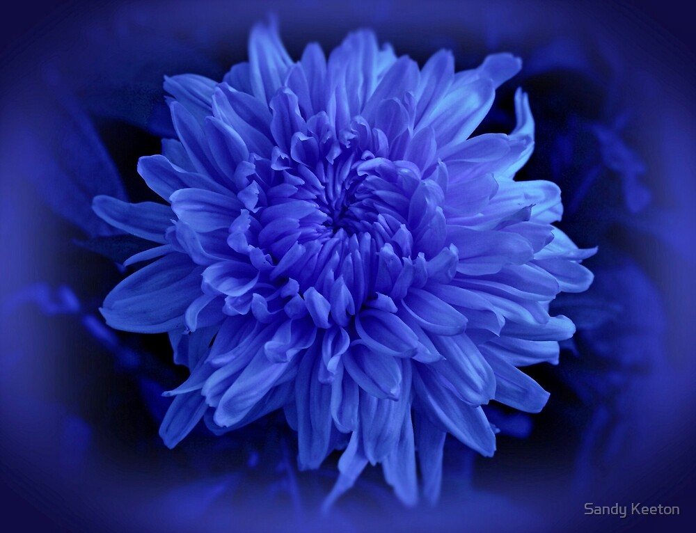 Chrysanthemum in Blue by Sandy Keeton