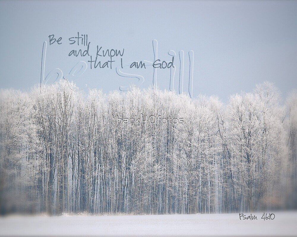 Frosted Trees by back40fotos