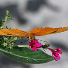 Butterfly Macro by TJ Baccari Photography