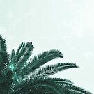 «Palmera resumen» de by-jwp