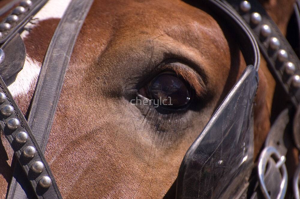 The eye of the horse by cherylc1