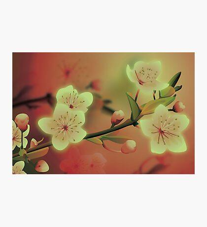 Yoshie blossom peach Photographic Print
