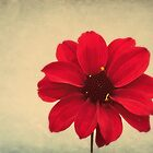 Flower From A Child by Christine Lake