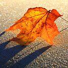 « Leaf of fall » par Päivi  Valkonen