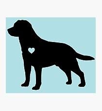 Labrador Love Photographic Print