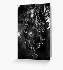Peppercorn Tree Greeting Card