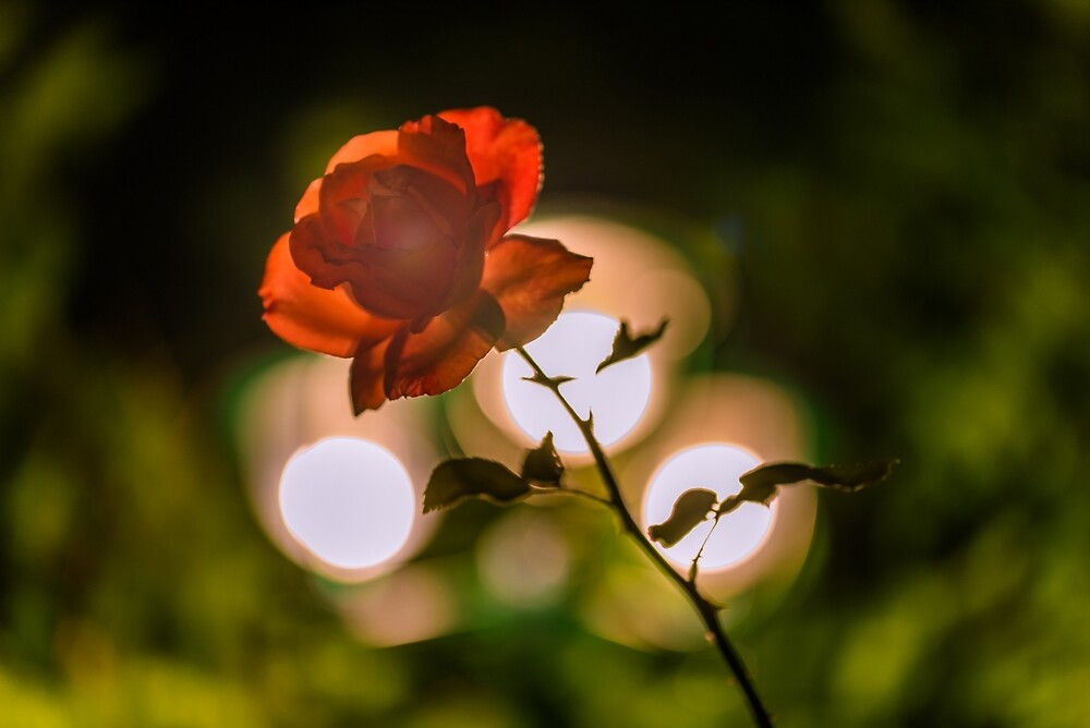 Flower macro by PeterCseke