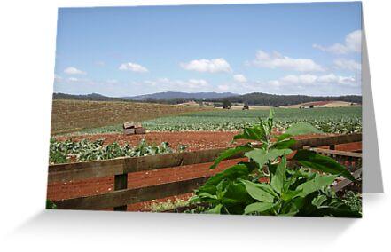 Rural Scene by Mark Whittle
