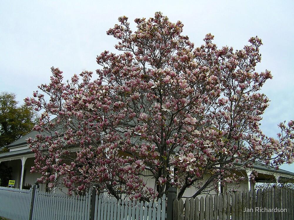 Magnolia Tree by Jan Richardson