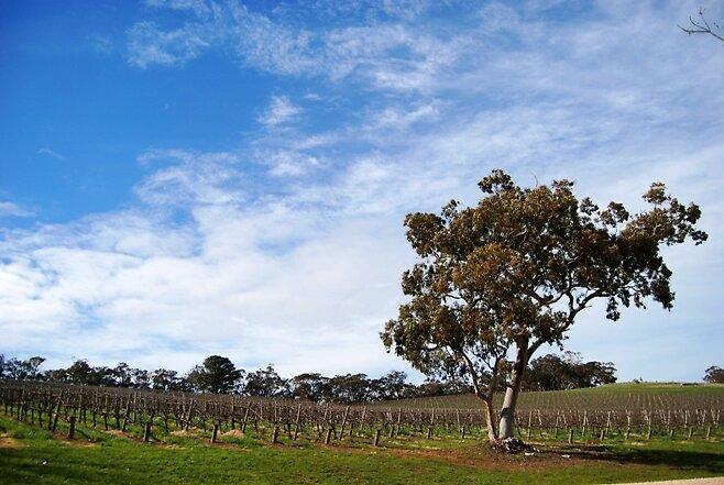 Kuipto Winery by ein22