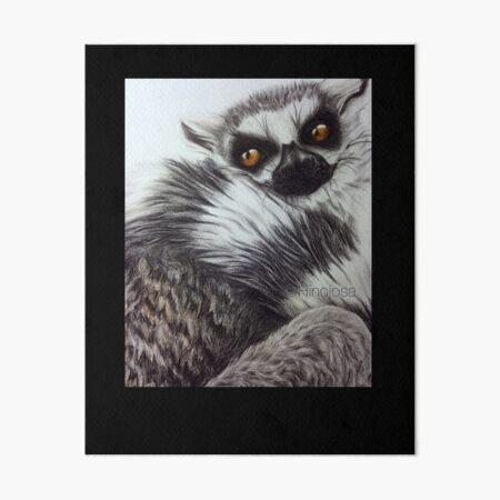 Lemur Lámina rígida