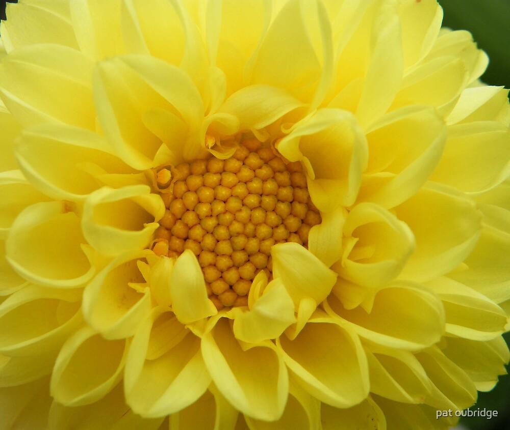 Lemon Pom-Pom by pat oubridge