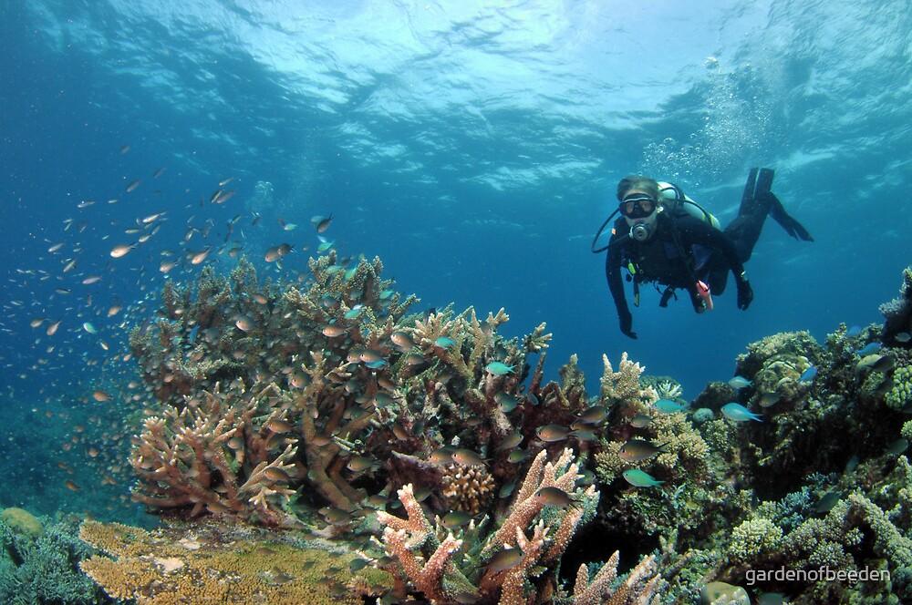 Dive into the Blue by gardenofbeeden