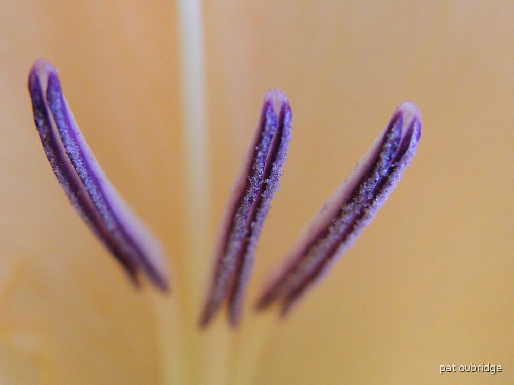Stamens by pat oubridge