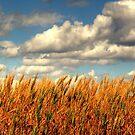 Prairie Gold!!! by Larry Trupp