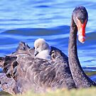 Cygnets Mobile Home  by EOS20