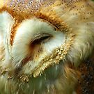 Barn Owl -3 by Trevor Kersley