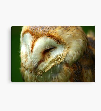 Barn Owl -3 Canvas Print
