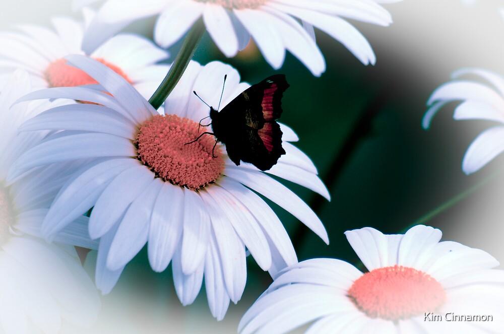 Daisies & Butterflies by Kim Cinnamon