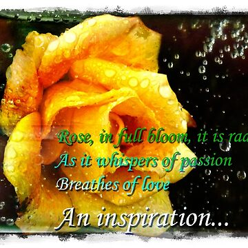 Inspiration of a rose photo design by naasirahramjan