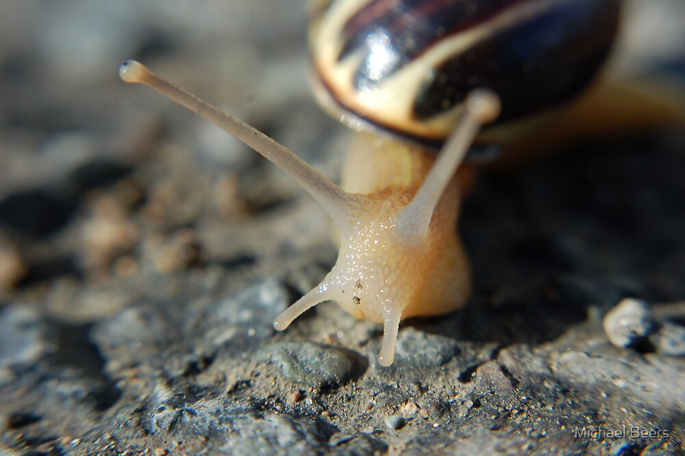 AS SLOW AS A SNAIL by Michael Beers