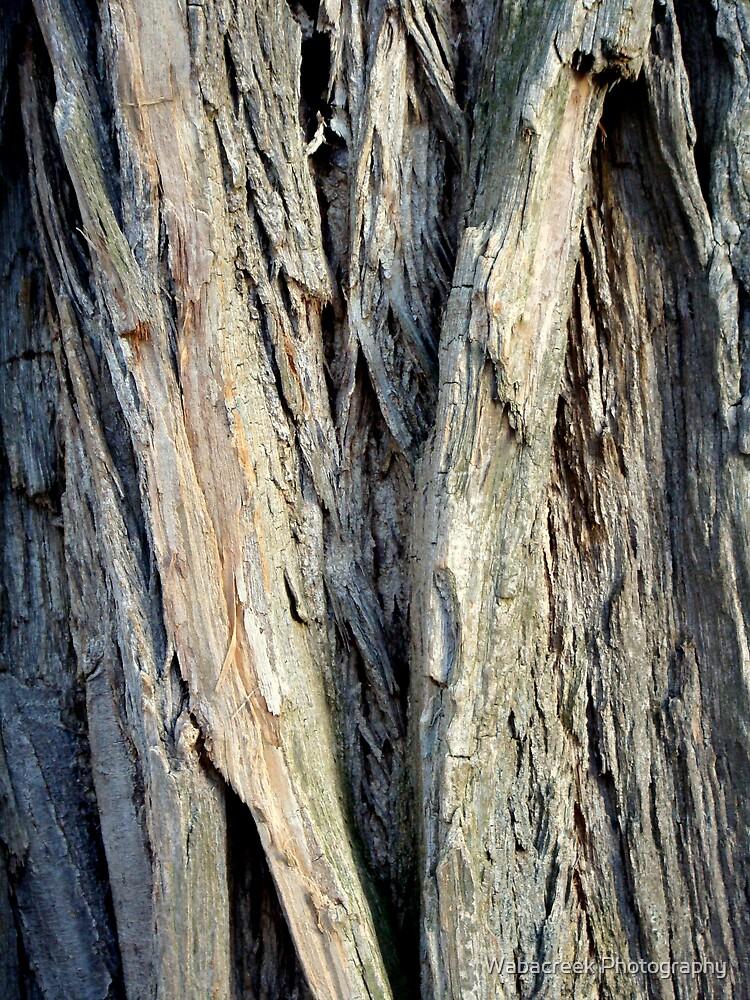 Tree bark by Jocelyne Phillips
