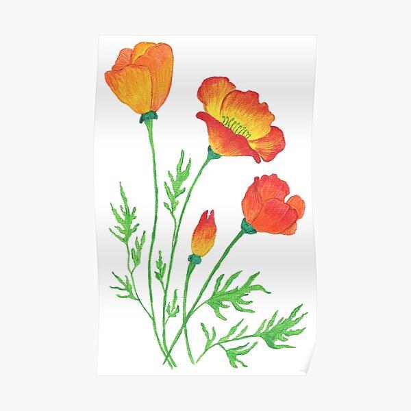 Orange Red Poppies  Poster