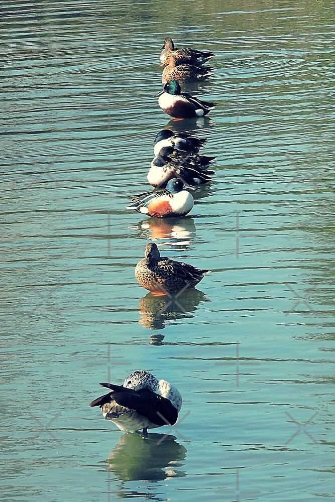 Ducks in a row by kcrystalfriend