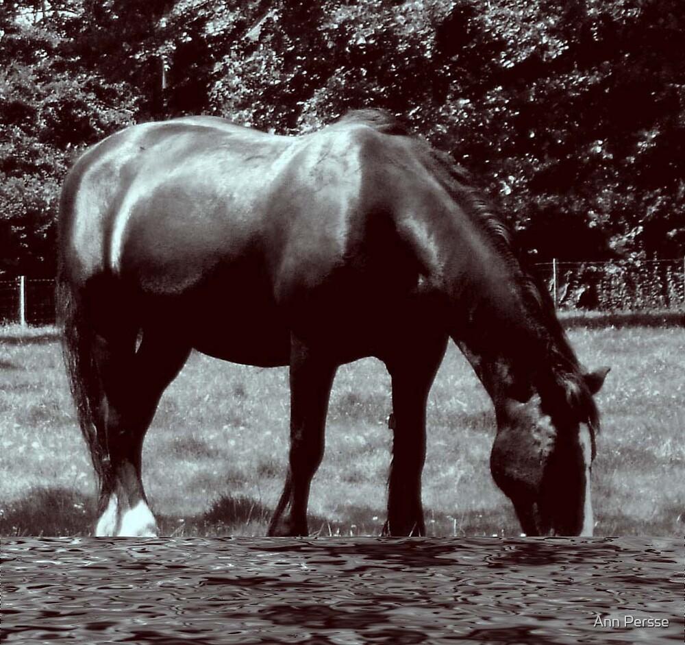 A Big Horse  by Ann Persse